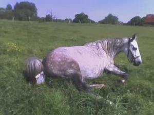 Griselda' Foals